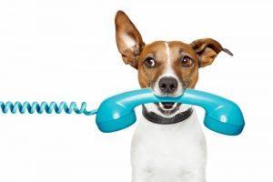 Contact Saltwell Bark - Dog groomers in Gateshead - Near Newcaslte