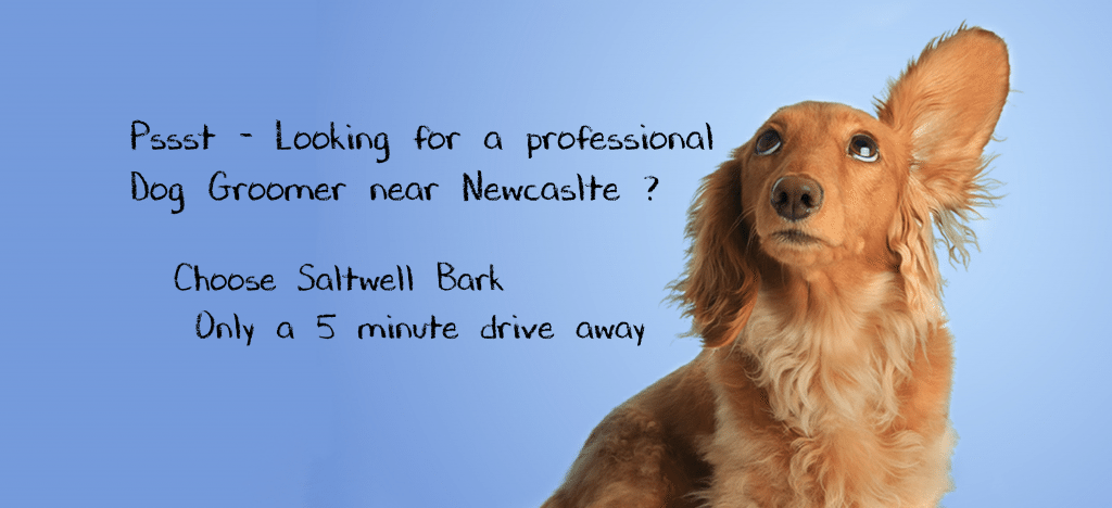 Newcastle dog Groomers - Dog grooming Newcastle